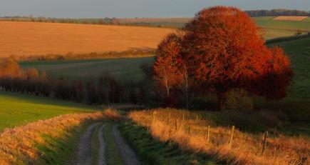 Wiltshire2013_022150214