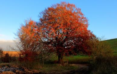 Wiltshire2013_023150214